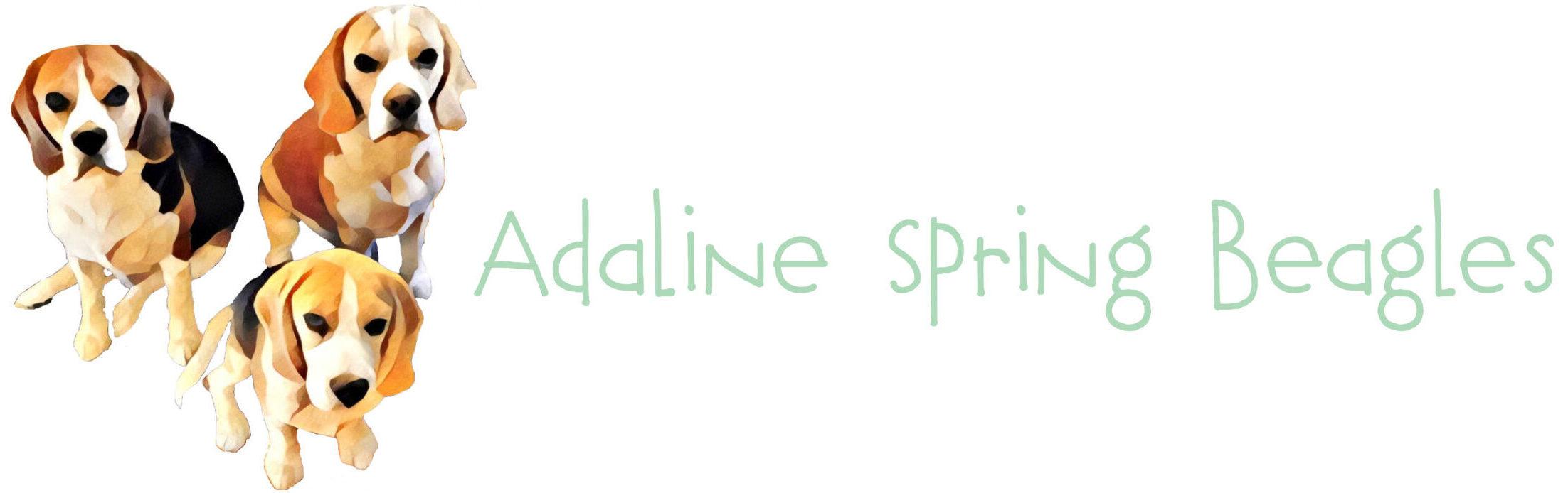 Adaline Spring Beagles